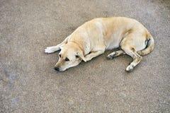 Thai light brown dog glance at me while lie down on the street. Thai light brown dog lie down on the street for sleeping and glance at camera Stock Images