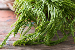 Thai local vegetable, Senegalia pennata or Acacia pennata Stock Image
