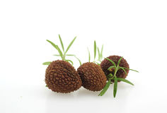 Thai Lychee, chakrapad cultivar, northern Thailand on white background 2017 Royalty Free Stock Photography