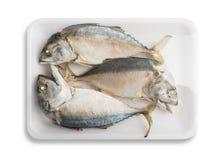 thai mackerel royaltyfri fotografi