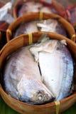 thai mackerel Royaltyfri Foto