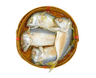Thai Mackerel on bamboo basket Royalty Free Stock Photography
