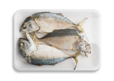 Thai mackerel. In foam white tray Royalty Free Stock Photography