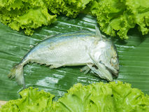 Thai Mackerel Royalty Free Stock Photo