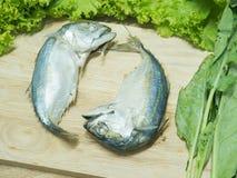 Thai Mackerel Stock Image