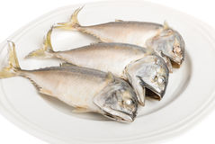 Thai Mackerel. On white background Royalty Free Stock Photo