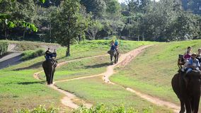 Thai mahout riding elephants at Thai Elephant Conservation Center Lampang stock video footage