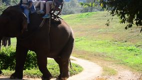 Thai mahout riding elephants at Thai Elephant Conservation Center Lampang stock video