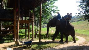Thai mahout riding elephants at Thai Elephant Conservation Center Lampang stock footage