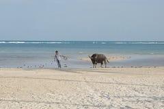 Thai man with a buffalo Royalty Free Stock Photos