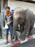 Thai Man with Elephant Calf. A Thai man sells food to feed to his young elephant at Damnoen Saduak floating market near Bangkok, Thailand Stock Photography