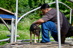 Thai man helping move fishhook from back of dog Stock Photo