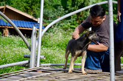Thai man helping move fishhook from back of dog Royalty Free Stock Photo