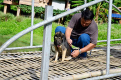 Thai man helping move fishhook from back of dog Stock Photos