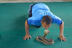 Thai man kissing cobra