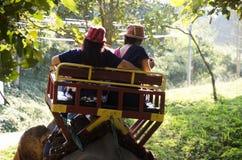 Thai man mahout riding elephant service people tour around fores Royalty Free Stock Photos