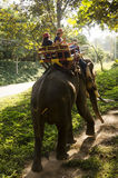 Thai man mahout riding elephant service people tour around forest Royalty Free Stock Photography