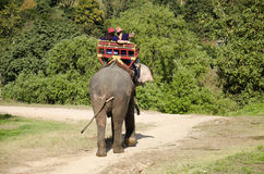 Thai man mahout riding elephant service people tour around forest Royalty Free Stock Images