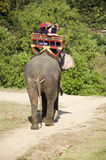 Thai man mahout riding elephant service people tour around forest Royalty Free Stock Photo