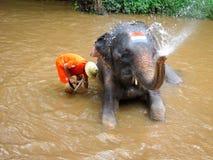 Thai Man Washing Elephant Royalty Free Stock Photography