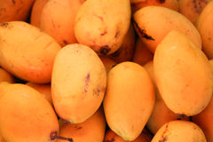 Thai mangoes. Yellow thai mangoes in Thailand Royalty Free Stock Photography