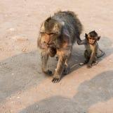 Thai monkey. Close up thai monkey in Triple Crown Castle,mom and baby monkeys,Phraphrangsamyod temple,Lopburi,Thailand Stock Photography