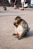 Thai monkey. Royalty Free Stock Photos