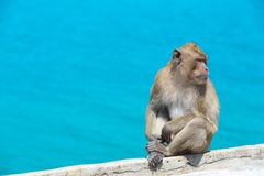 Thai monkey at  sea Royalty Free Stock Photos