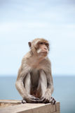 Thai Monkey and the sea Royalty Free Stock Images