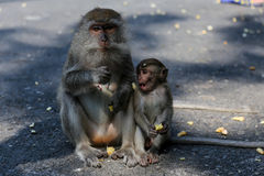 Thai monkey Thailand Royalty Free Stock Images