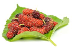 Thai mulberry. Royalty Free Stock Image