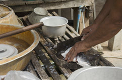 Thai old men people prepare and scale and clean fish Barramundi. Fish for cooking food southern of thai style in Phatthalung, Thailand stock photos