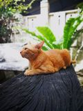 thai orange katt Royaltyfria Foton