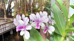Thai orchid stock photography