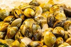 Thai oysters enamel venus shell Meretrix lyrata a lot of fresh seashells delicious sea delicacy background a tray of a fisherman stock images