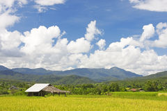 Thai paddy field stock image