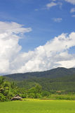 Thai Paddy Field Stock Photo