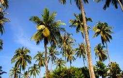 Thai palm trees Stock Photos