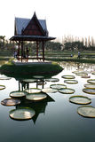 Thai pavilion in lotus pond Royalty Free Stock Image