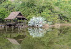 Thai pavillion in the park Royalty Free Stock Photography
