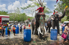 Thai people and foreigner travelers playing and splashing water with elephants and people in Songkran Festival at Ayutthaya Stock Images