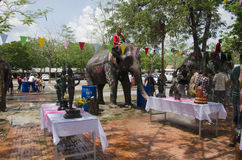 Thai people and foreigner travelers playing and splashing water with elephants and people in Songkran Festival at Ayutthaya. City on April 14, 2017 in Ayutthaya royalty free stock images