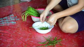 Thai people prepare Senegalia pennata vegetables for cooking stock video footage