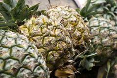Thai Pineapples. Pineapples stacked on the wood background for sale. Close up and Selective focus Stock Images