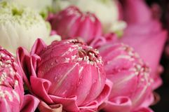 Thai pink lotus Stock Photos