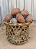 Thai pumpkin fruit Stock Photography