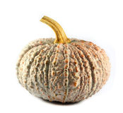 Thai pumpkin Stock Images