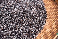 Thai Raw Black sticky rice Royalty Free Stock Photo