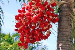 Thai red fruit Royalty Free Stock Photo