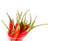 Thai red hot chilli isolated Royalty Free Stock Image